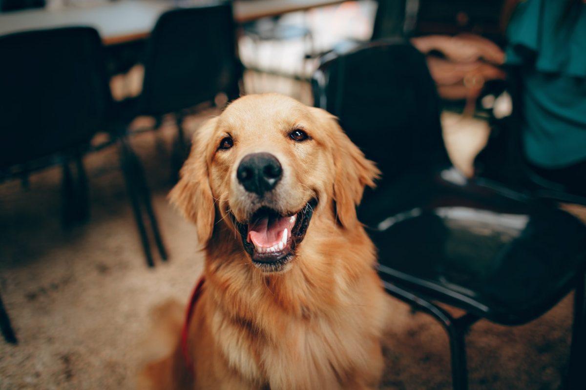 Se pes v našem domu dobro počuti?