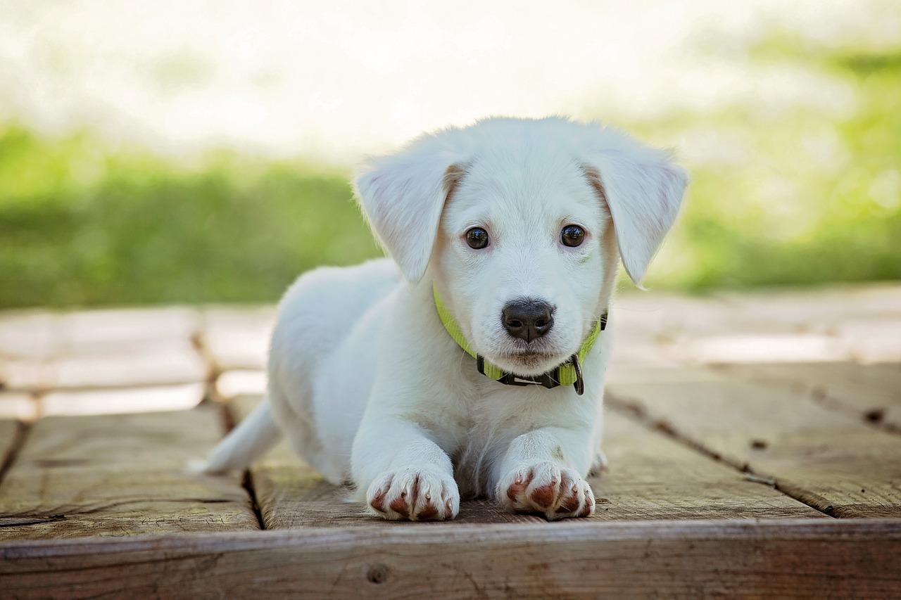 Zakaj mora biti pes prijavljen in označen?