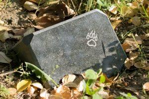 Organiziran pokop domače živali
