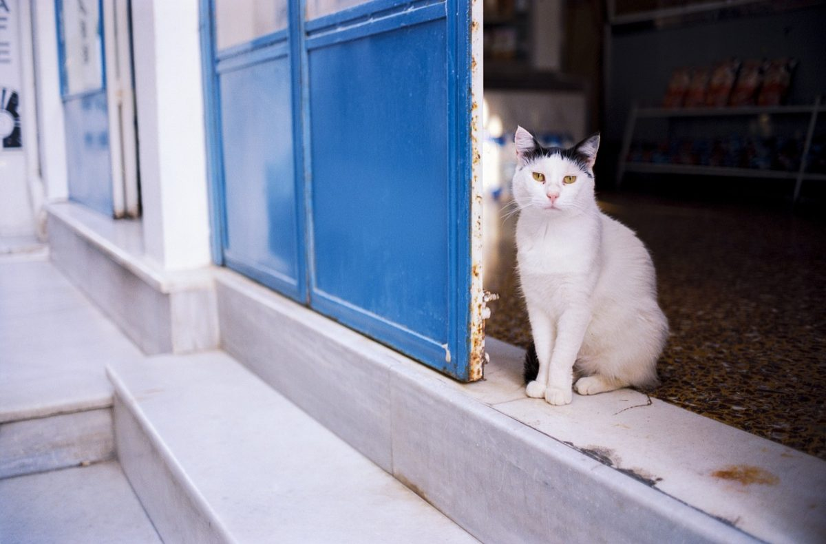 Kako poskrbeti za mačko, ko gremo na dopust?