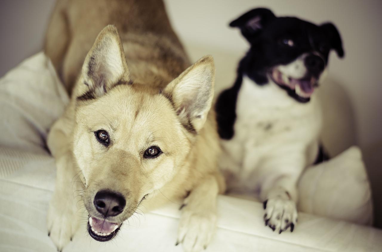 So psi ljubosumni?