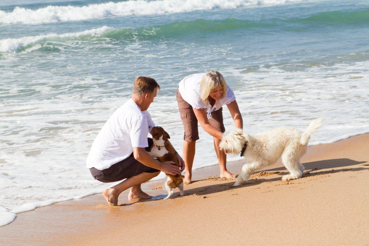 Kako psa navaditi na vodo?