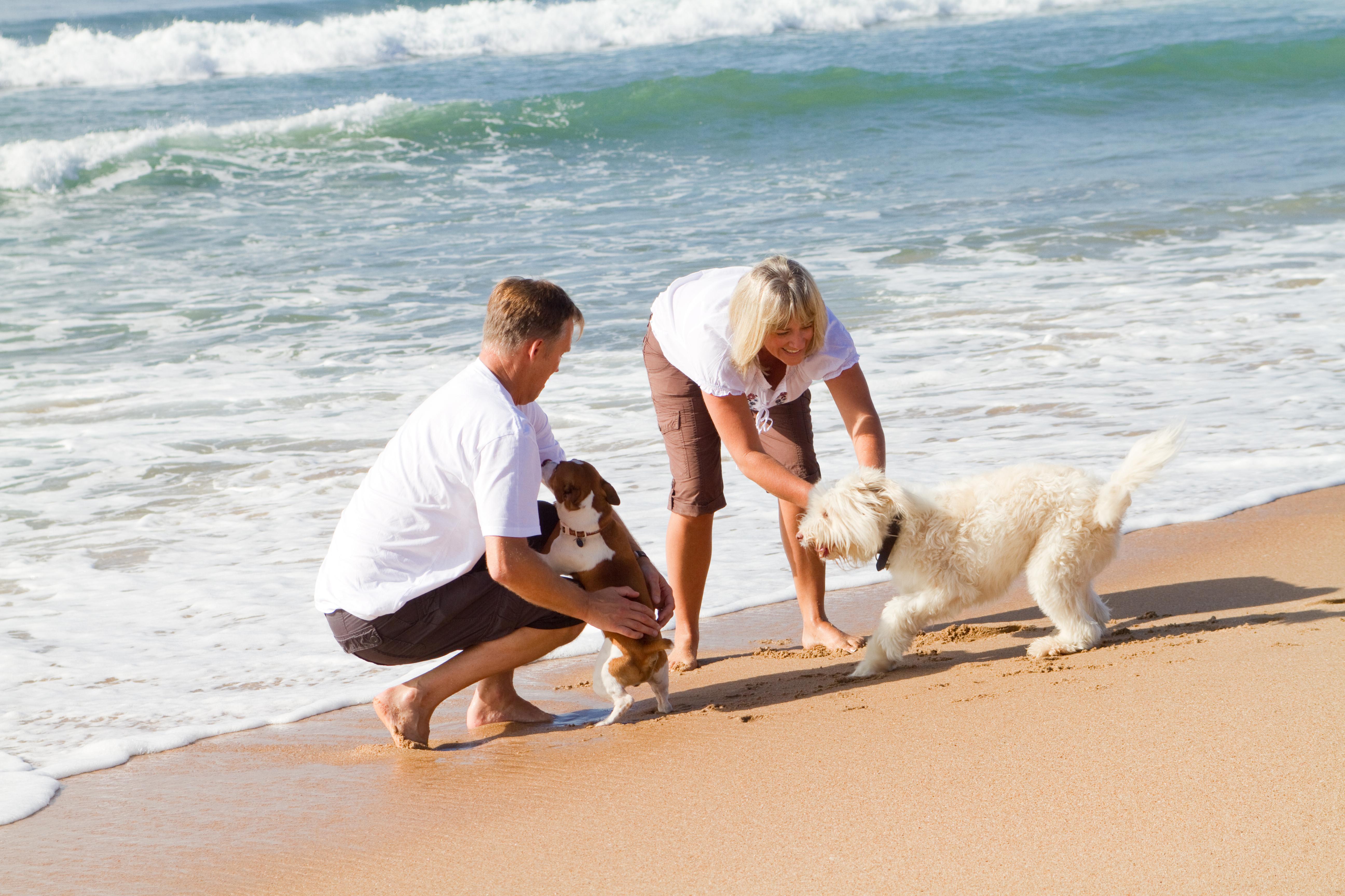 Kaj vse sodi v pasjo potovalno lekarno?