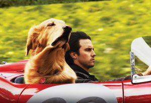 Filmska novost: Neverjetno življenje psička Enza