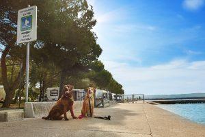 Pasje počitnice na slovenski obali
