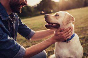 4 načini, kako se zahvaliti našim ljubljenčkom