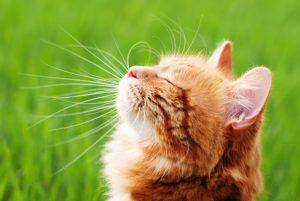 Poletne tegobe mačk: od sončnih opeklin do pikov insektov