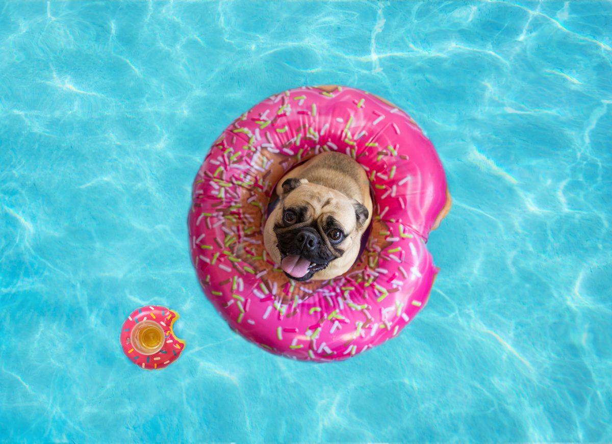 Poletje za pse z brahicefaličnim sindromom