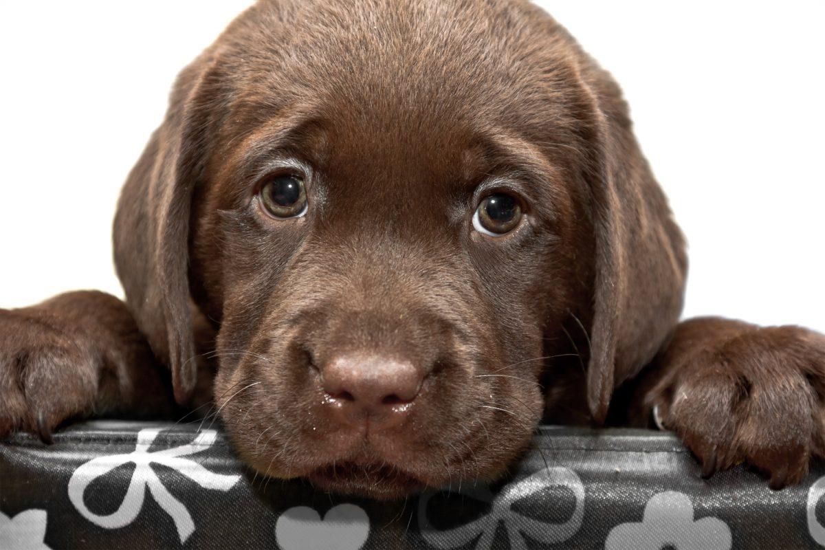 Naši psi uporabljajo svoje ljubke oči, da bi jim ugodili