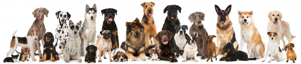 Kako izbrati pravo pasmo zame?