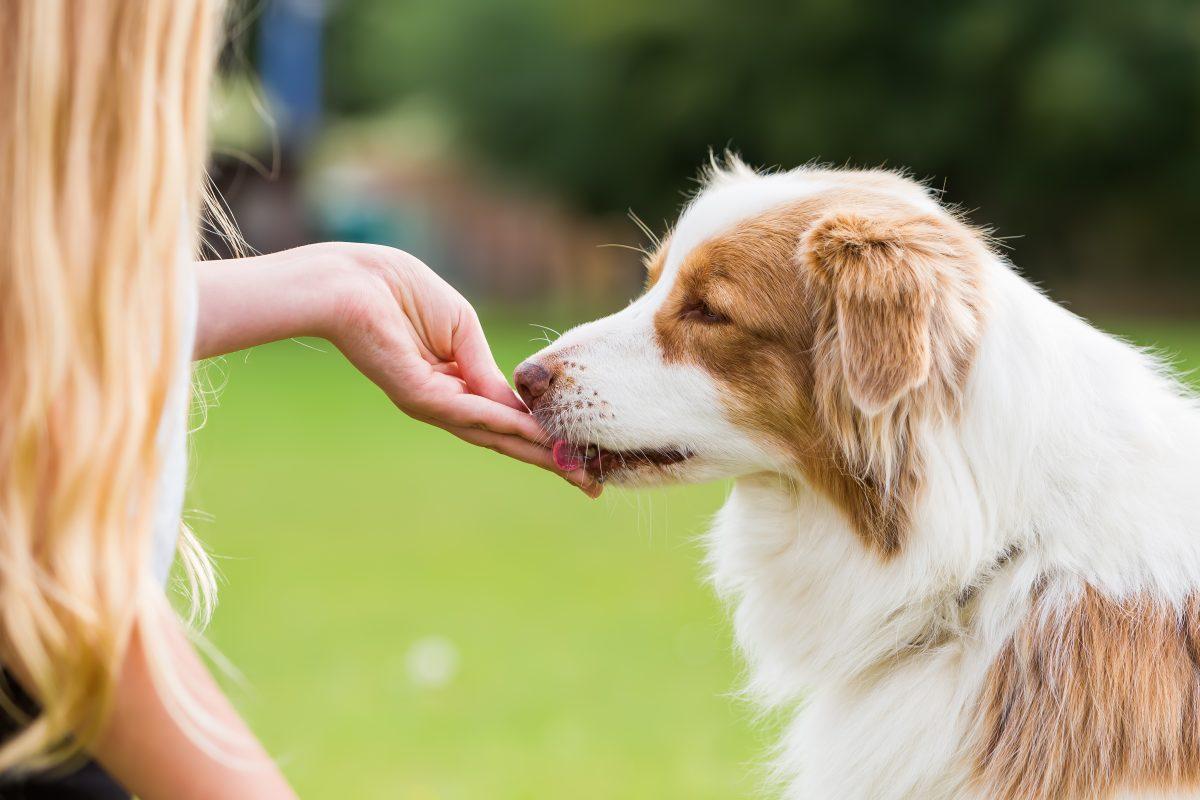 Salmonela v pasjih priboljških?