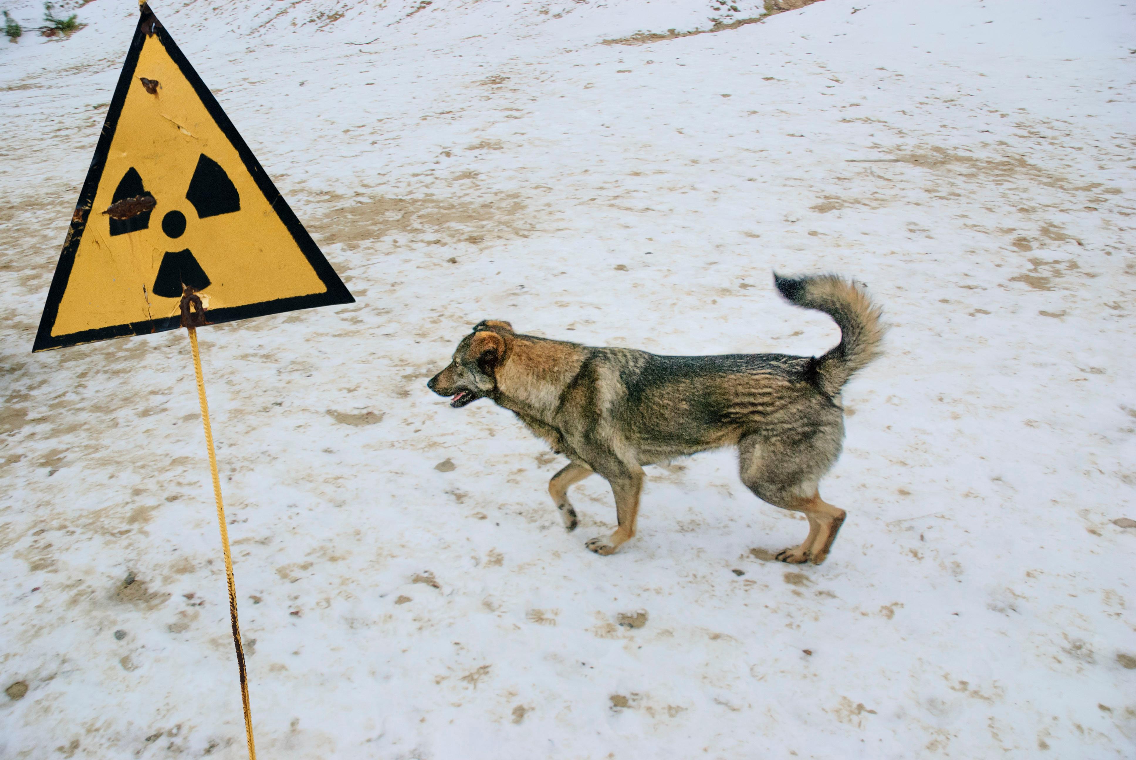 Psi Černobila