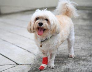Tujek pri psu – kako ravnati?