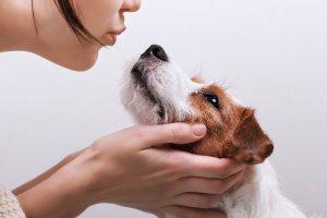 Pasji skrbniki več »lupčkajo« kužke kot svoje partnerje