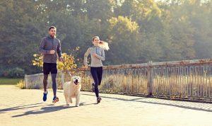 Kako se pripraviti na varen tek s psom?