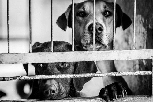 Zgodba psa iz zavetišča