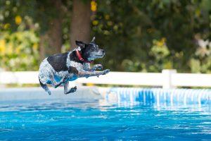 Poznate disciplino: Flying dogs?