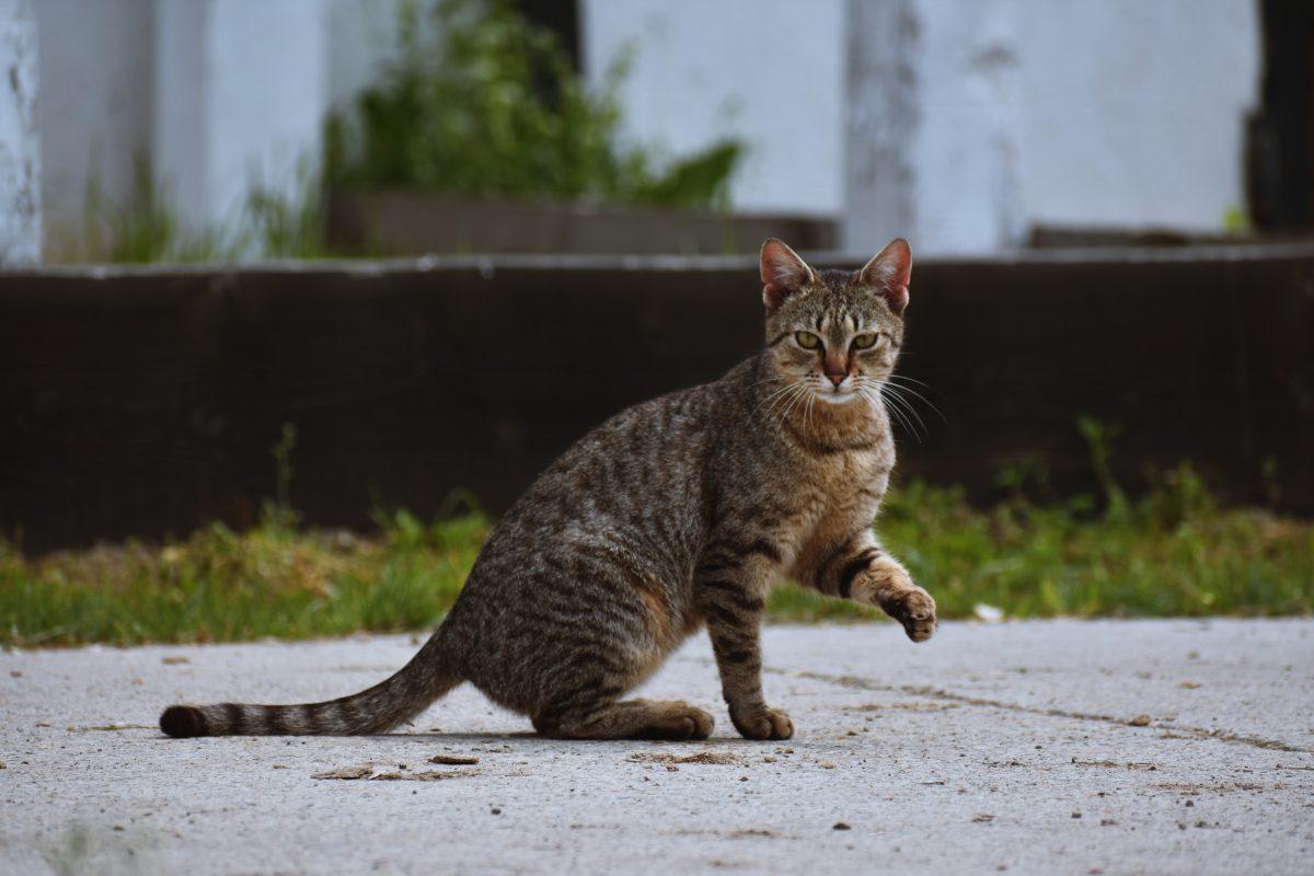 V Kranju bodo sterilizirali in kastrirali zapuščene mačke