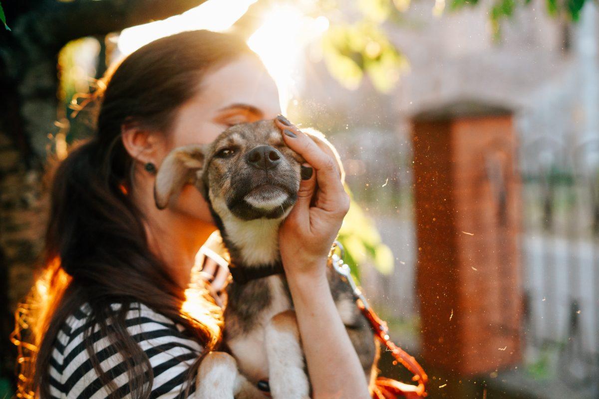 Nizozemska uradno prva država brez uličnih psov