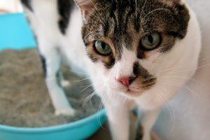Je za uriniranje izven stranišča pri mački kriv mačji posip?