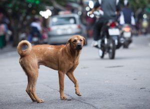 Od leta 2021 nič več pasjega mesa v vietnamskih restavracijah