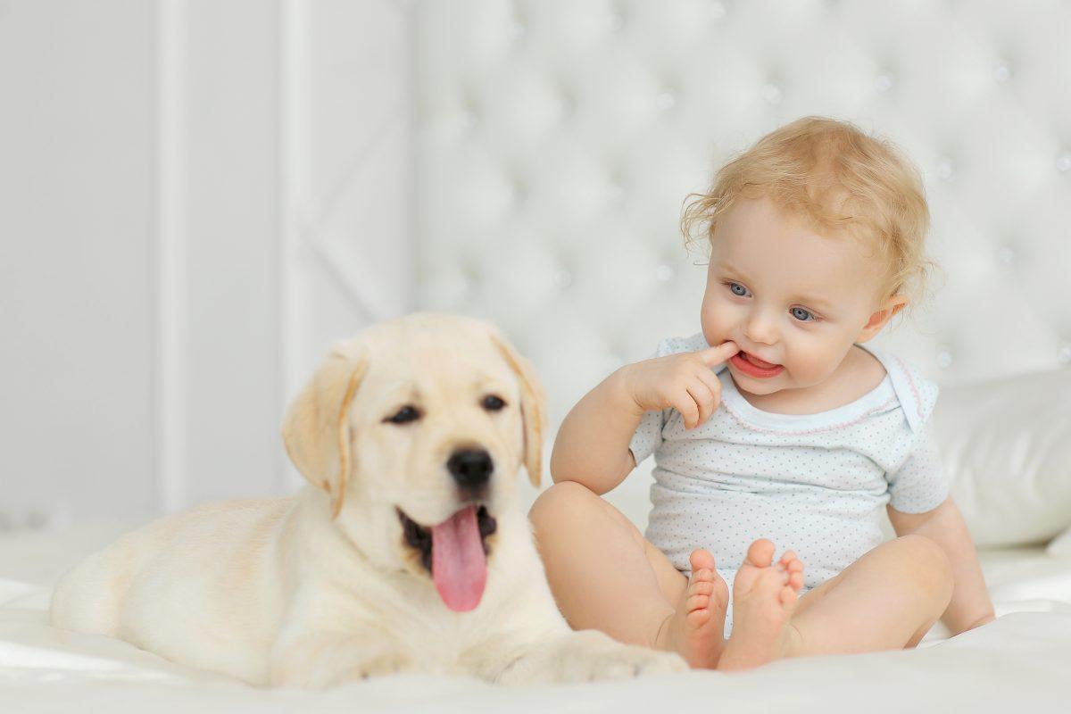 Kako psa pripraviti na prihod dojenčka