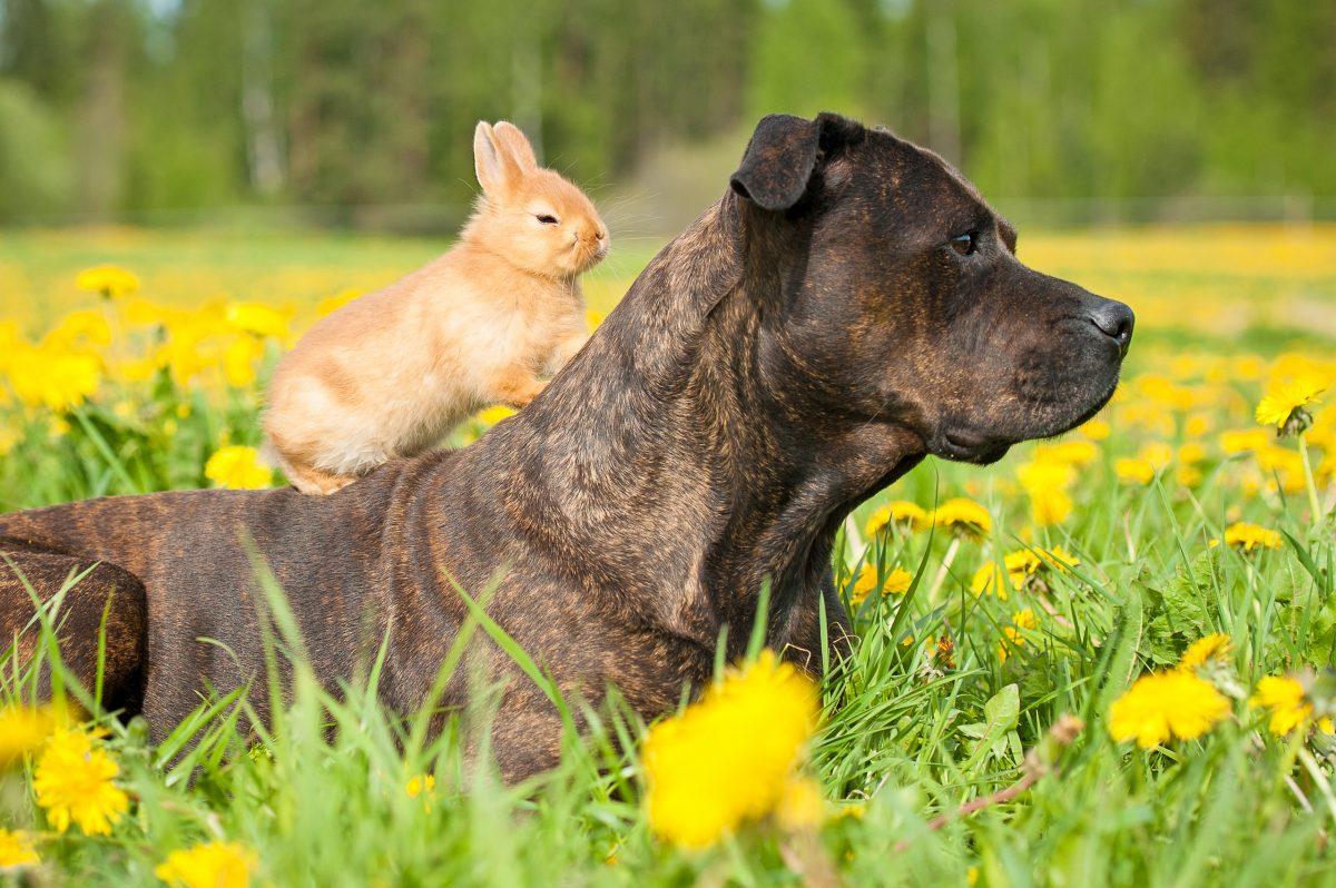 Fotozgodba: Najlepša živalska prijateljstva