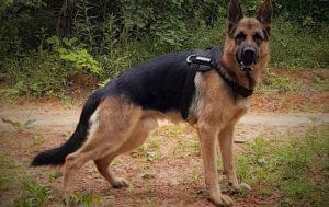 Po brutalnem napadu poginil reševalni pes Rex
