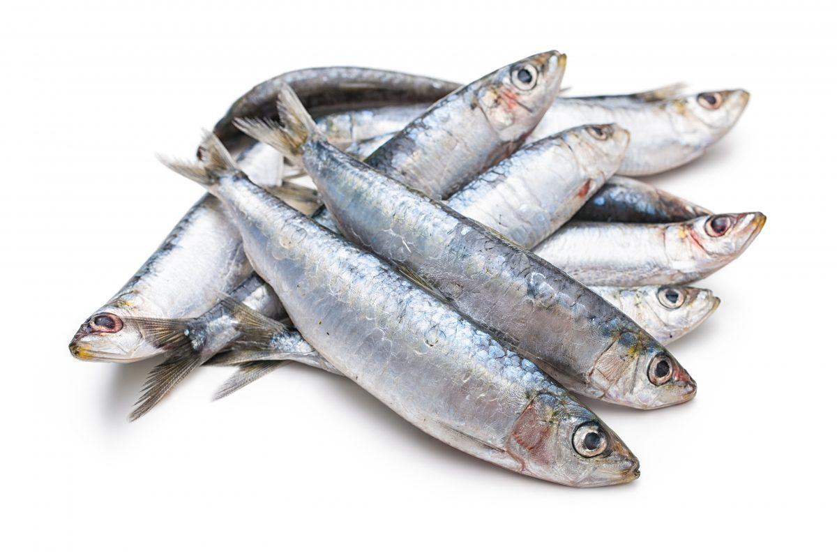 Piškotki s sardinami