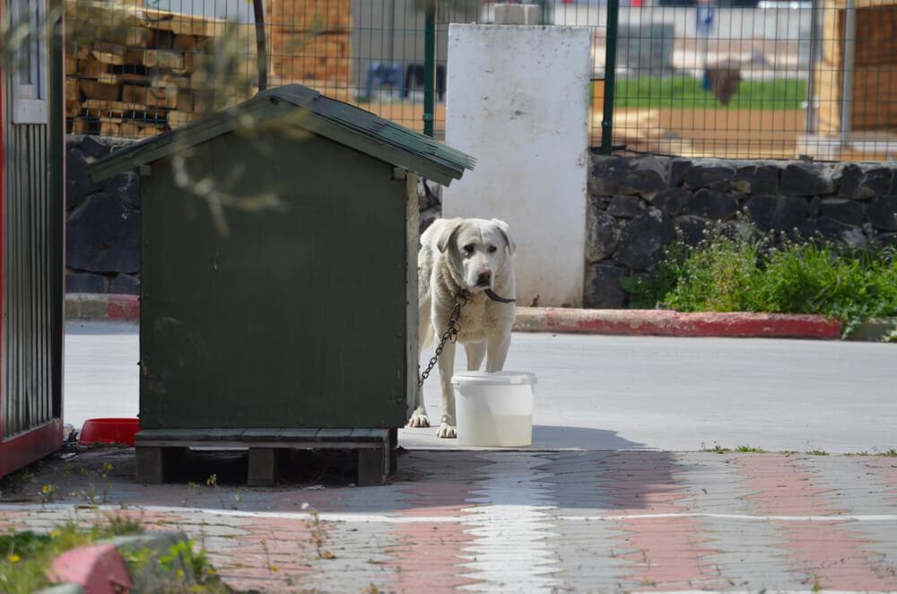 Pes kot inventar za varovanje objekta ali zemljišča