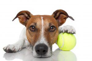 Nagrado si mora pes prislužiti