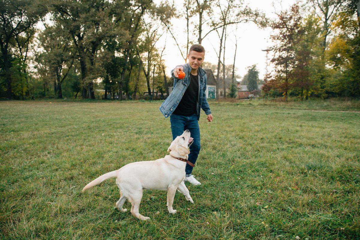 Kako nagraditi psa brez, da mu ponudite hrano?