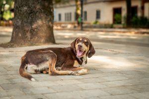 Po psa na Balkan ali v slovensko zavetišče?