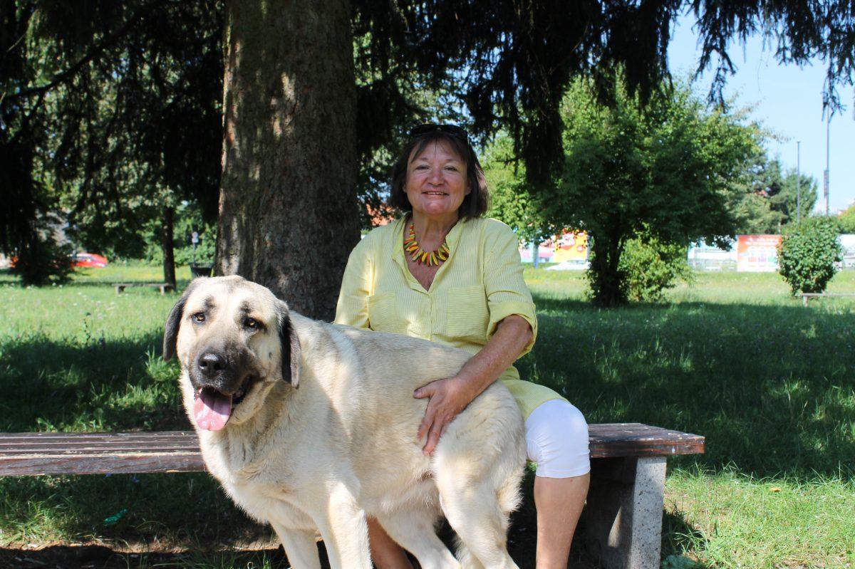 Pogovor: Zdenka Peloz, ki je posvojila psičko iz Bosne
