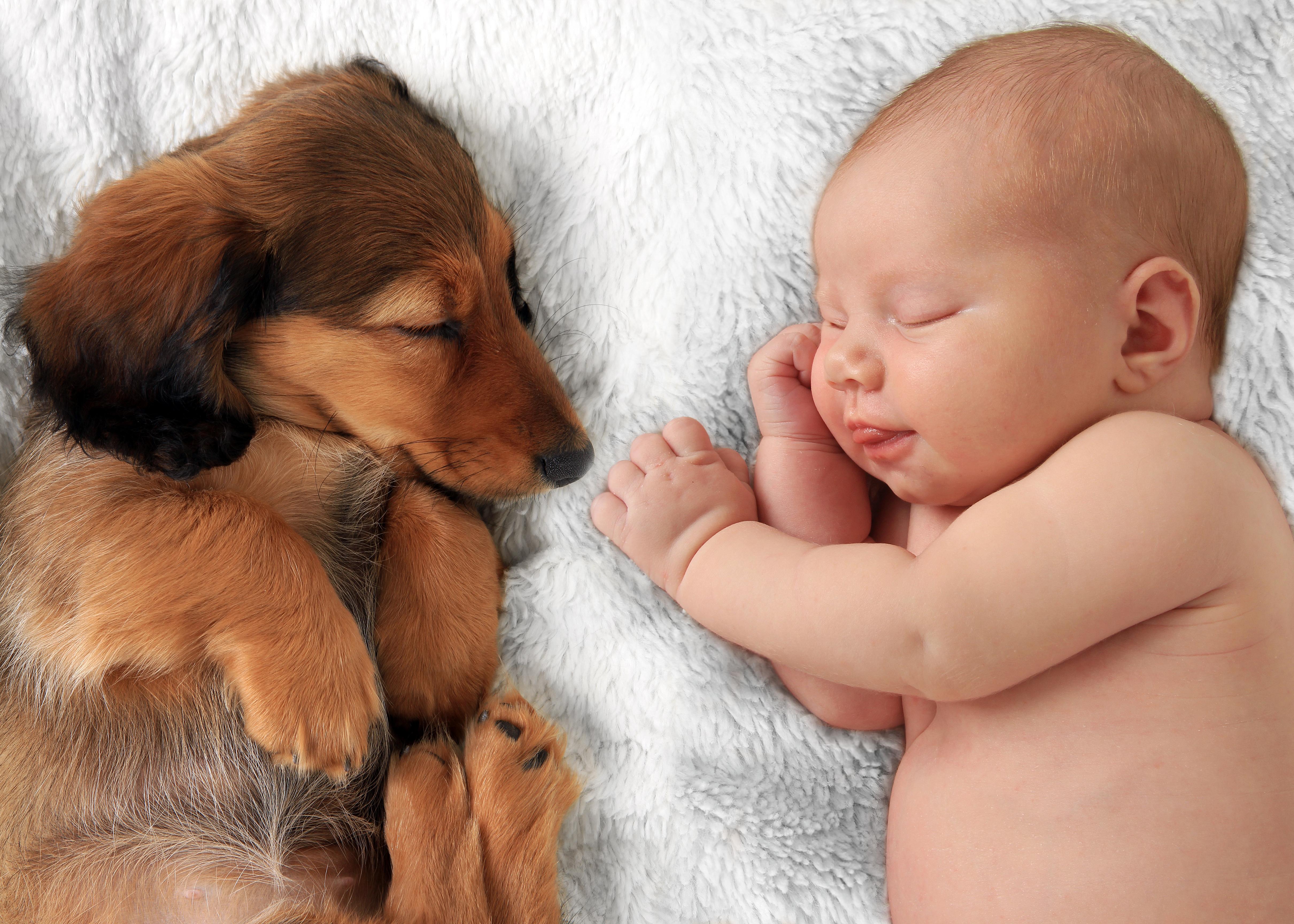 Kako navaditi psa na prihod dojenčka?