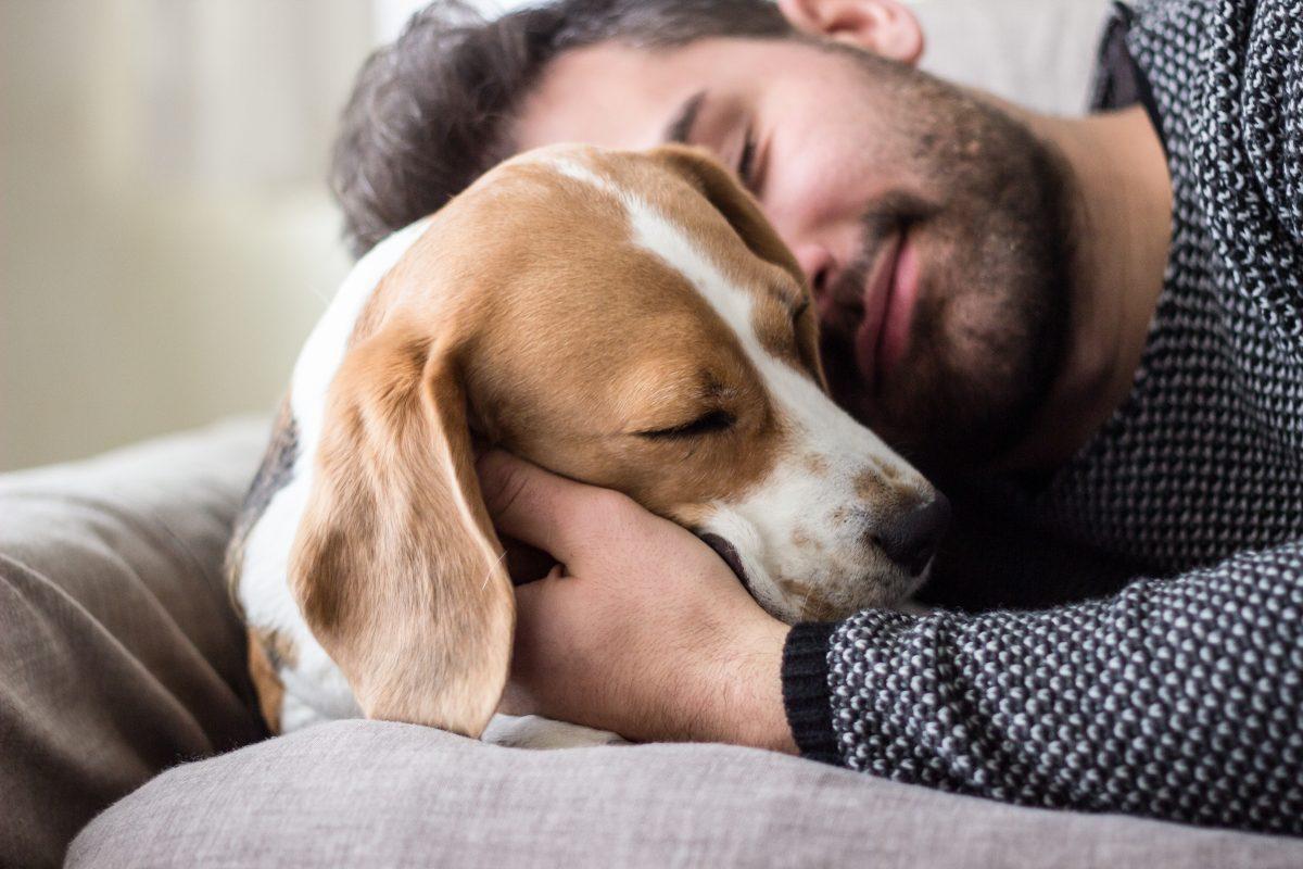 Koliko let dočakajo psi?