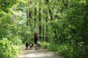 Vedno več zanimanja za najem 'sprehajalca psov'