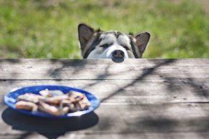 Ksilitol – pogost nadomestek sladkorja, ki je za pse lahko smrtno nevaren