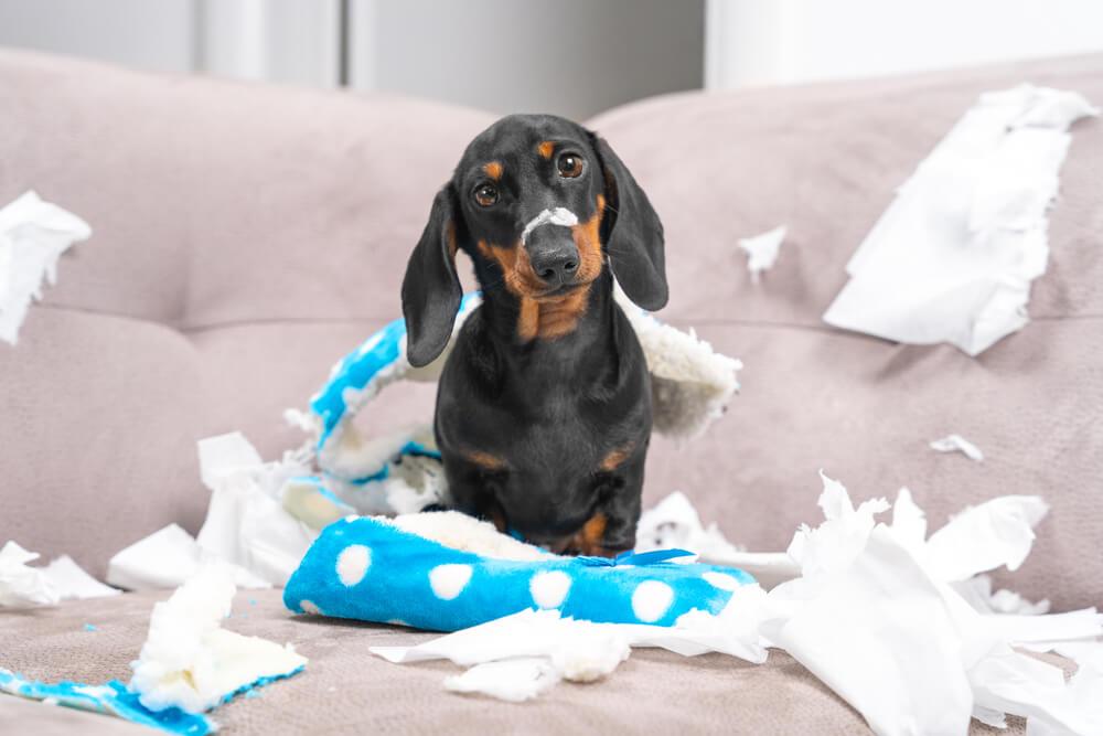 10 neželenih pasjih vedenj in kako ukrepati