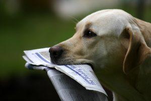 Zakaj psi ne marajo poštarjev?