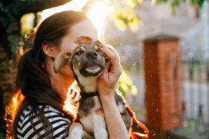 V tujini posvojen pes mora izpolnjevati veterinarske pogoje za vstop
