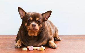 Za večji občutek sitosti: Psa pretentajte z zelenjavo!