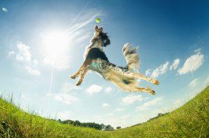 Vaje za izboljšanje samozavesti psa