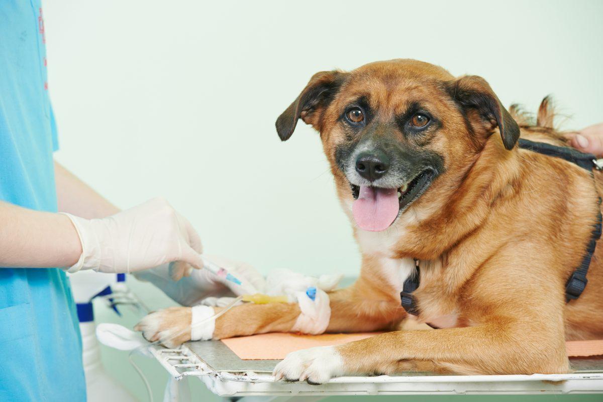 Krvna skupina pri psu je pomembna!