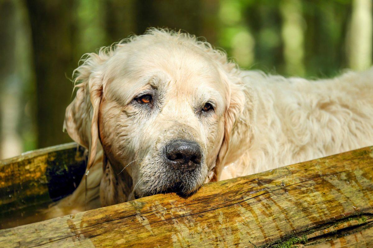 Pasja starost je posebno obdobje