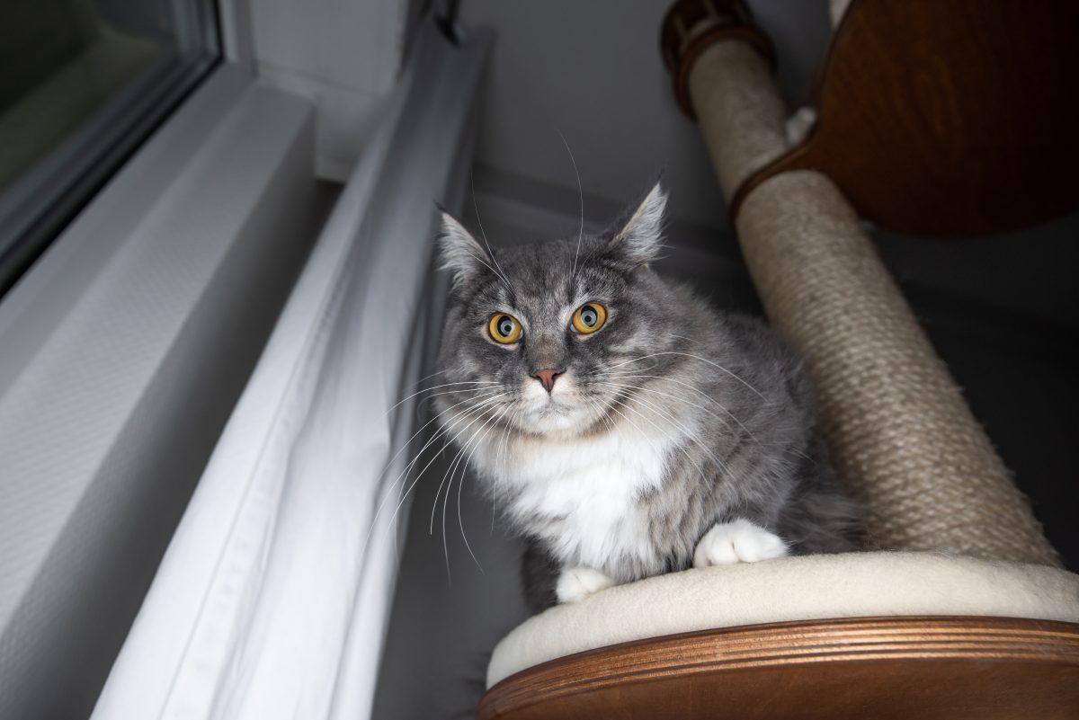 Zakaj mačka ne mara praskalnika, ki ste ga kupili?