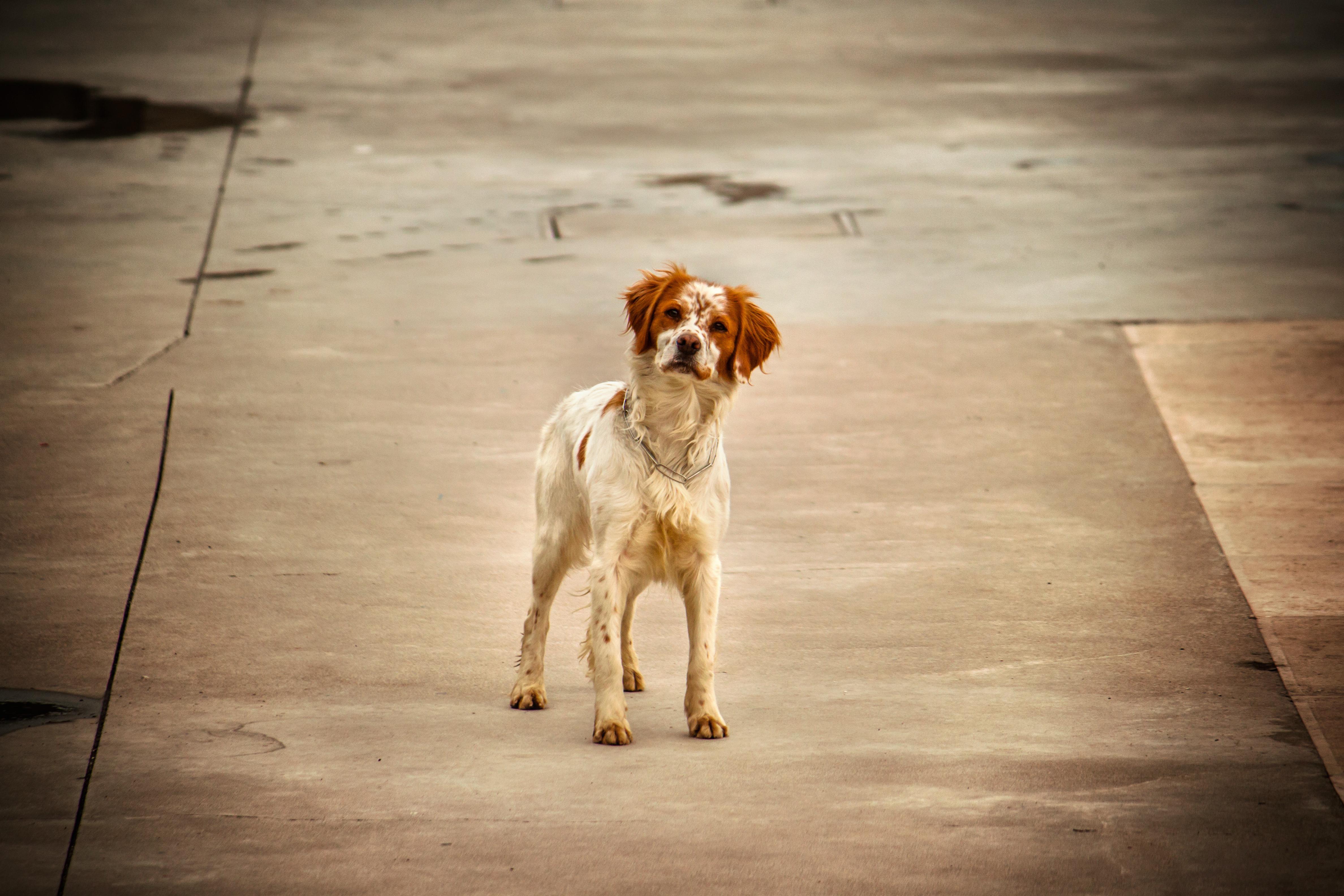 Znaki demence pri psu