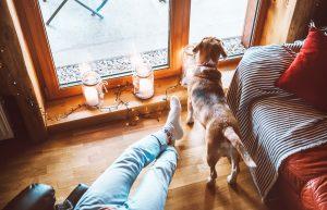Počitnice s psom v angleški koči – pa še plačajo vam za to!
