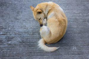 Resnica ali mit: Si morajo psi res lizati rane, da se zacelijo?