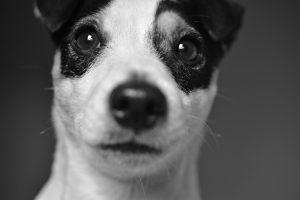 'Električna oz. elektronska ovratnica je škodljiva za psa'